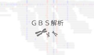 GBS解析